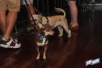 dogdays2014_2163