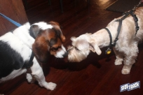 dogdays2014_2190