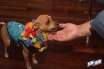 dogdays2014_2234