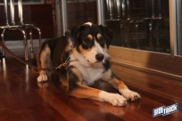 dogdays2014_2301
