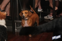 dogdays2014_2355