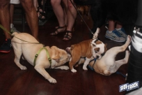 dogdays2014_2402